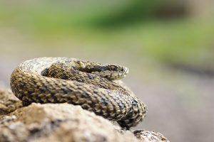 Sarasota Snakes