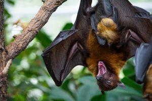 Sarasota Bat Control